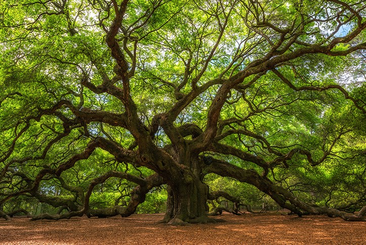 Angel Oak-Charleston Free Activities.jpg