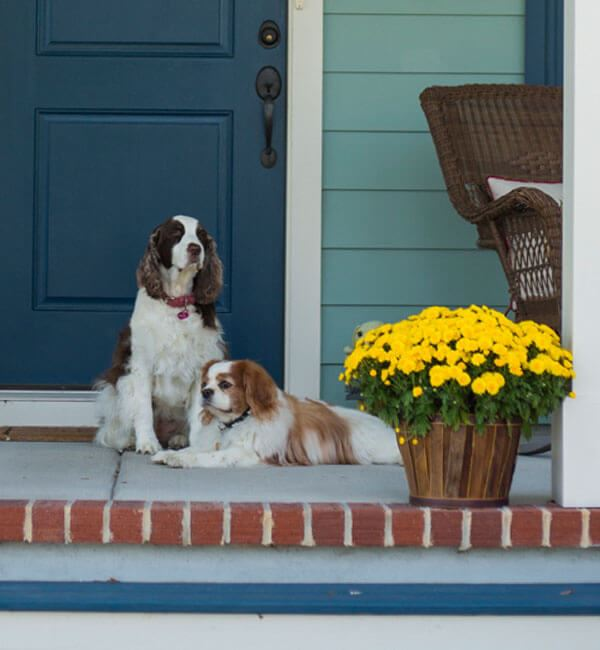 Dogs on front porch of a home in Nexton.